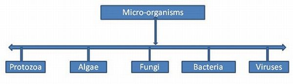 Taxonomic Differentiation of Microbes